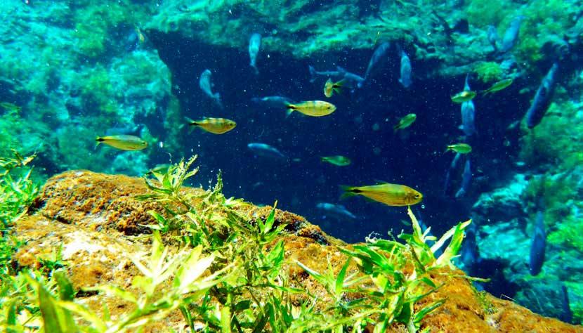Flutuação com snorkel/ Crédito foto: http://www.cvc.com.br/destinos/brasil/bonito