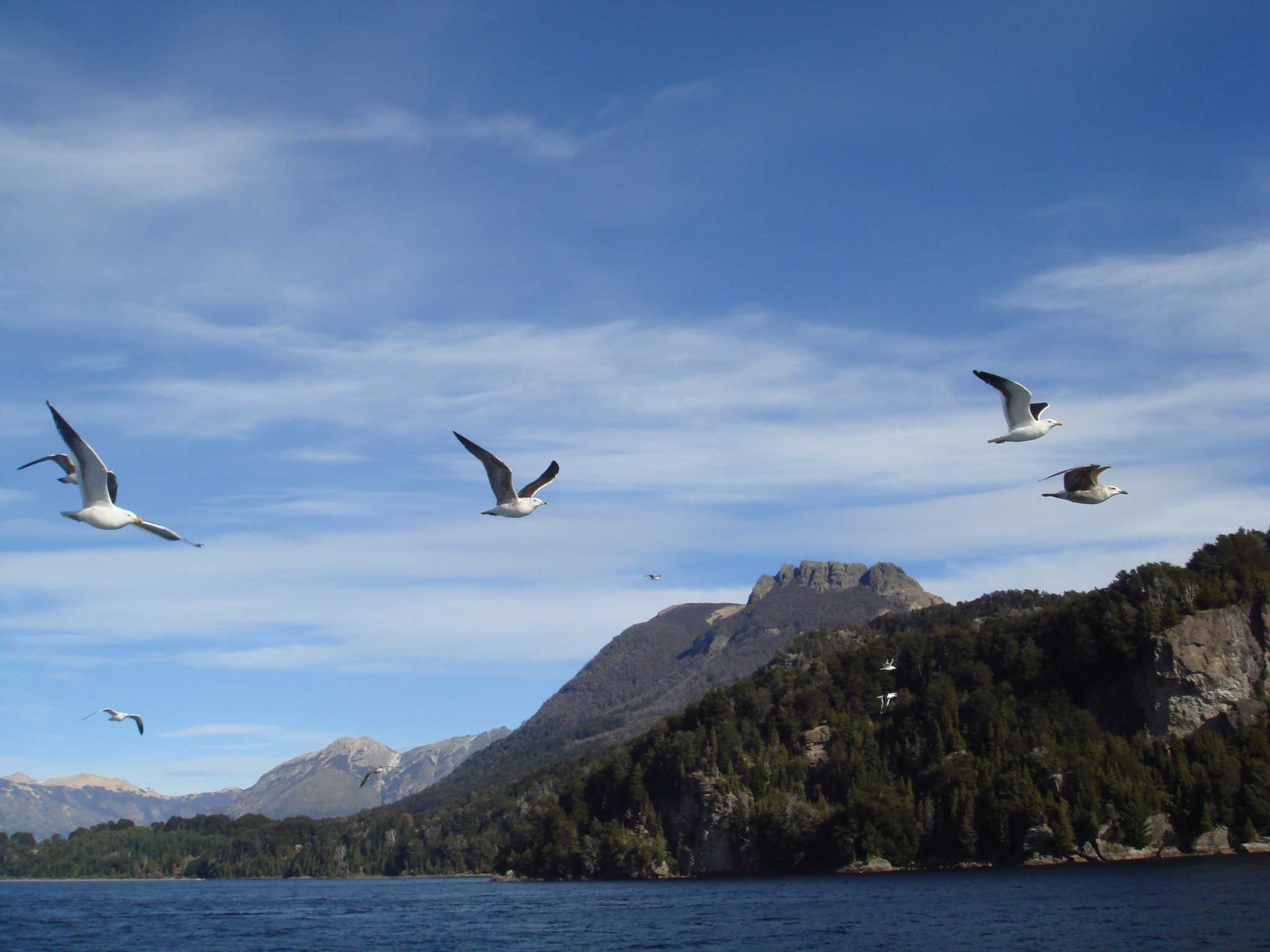 Gaivotas voando ao nosso lado no catamarã Cau Cau indo para Isla Victoria
