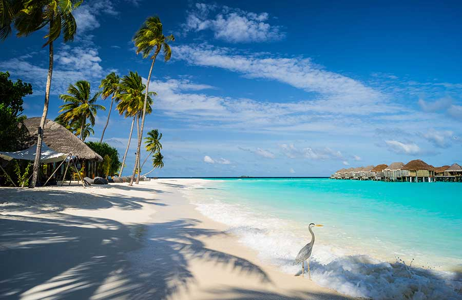 Crédito foto: http://www.adventureclub.com.br/blog/dicas-de-viagem/onde-fica-e-como-podemos-chegar-em-male-nas-ilhas-maldivas/