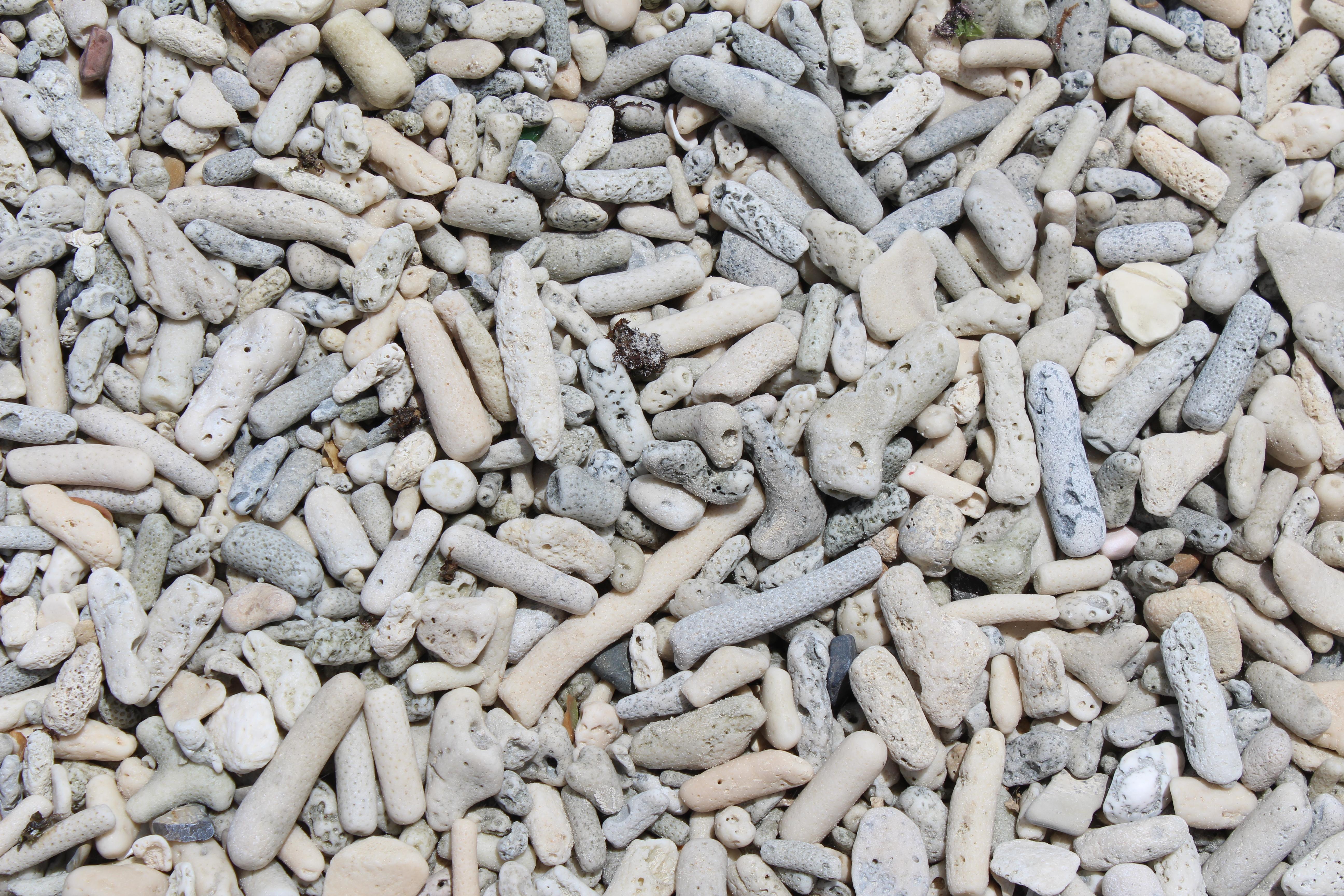 restos de corais beira da praia-1