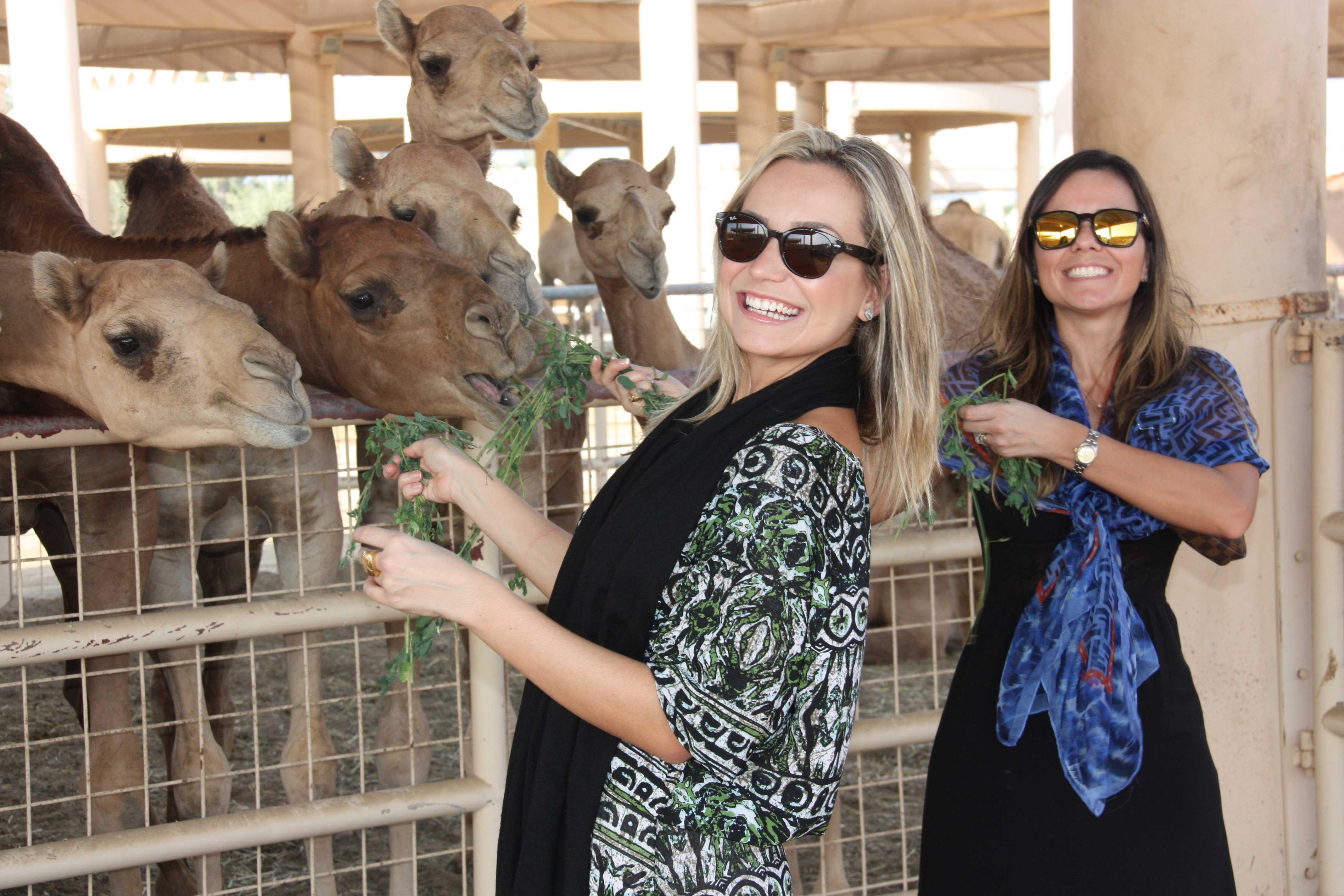 royal-camel-farm-020-(3)