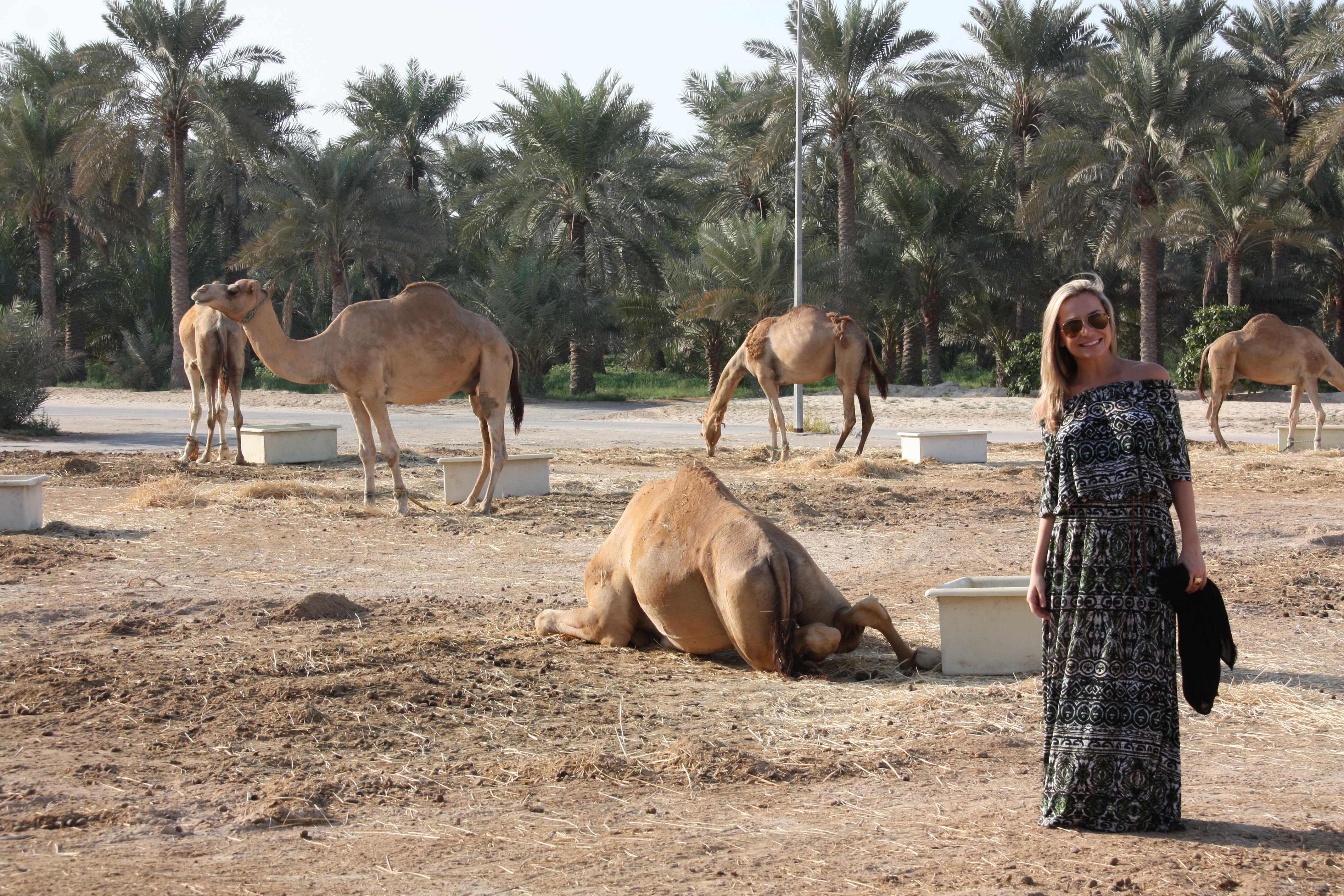 royal-camel-farm-040-(2)