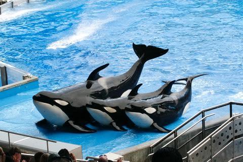 baleias 1