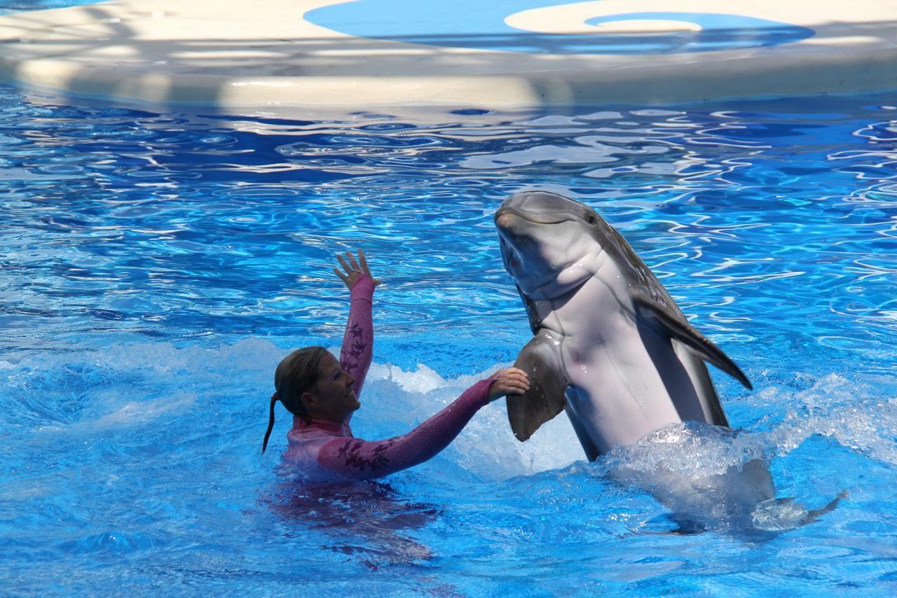 golfinhos 1