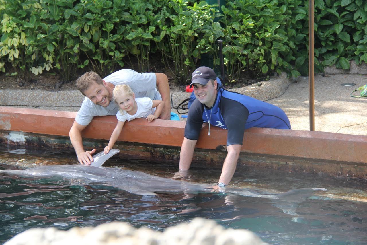 golfinhos 2