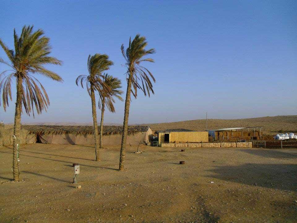 Tenda beduína