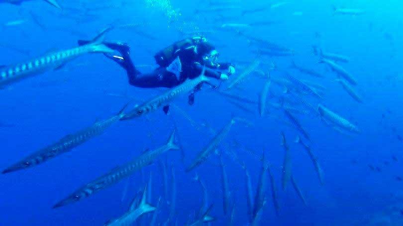 Crédito foto: http://exame.abril.com.br/estilo-de-vida/noticias/6-destinos-incriveis-para-quem-gosta-de-mergulhar#4