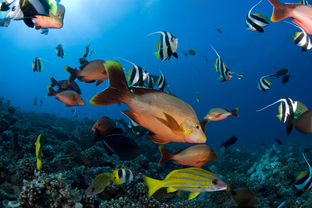 Shoal of Coral Fishes, Moorea, French Polynesia
