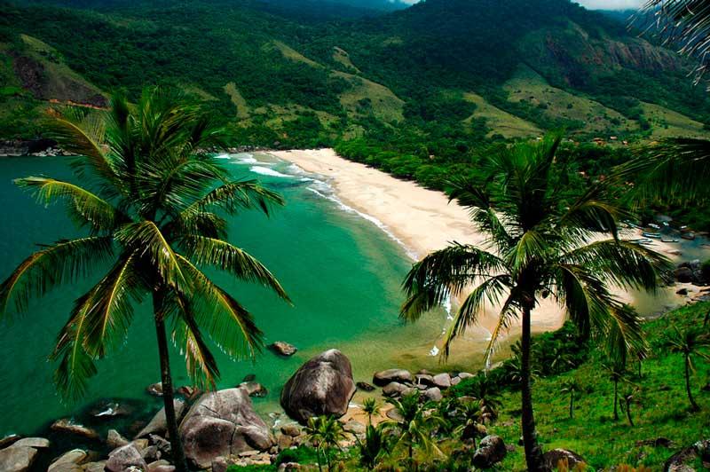 Crédito foto: http://renatogrimm.com/bemtevi/ilhabela-sp/