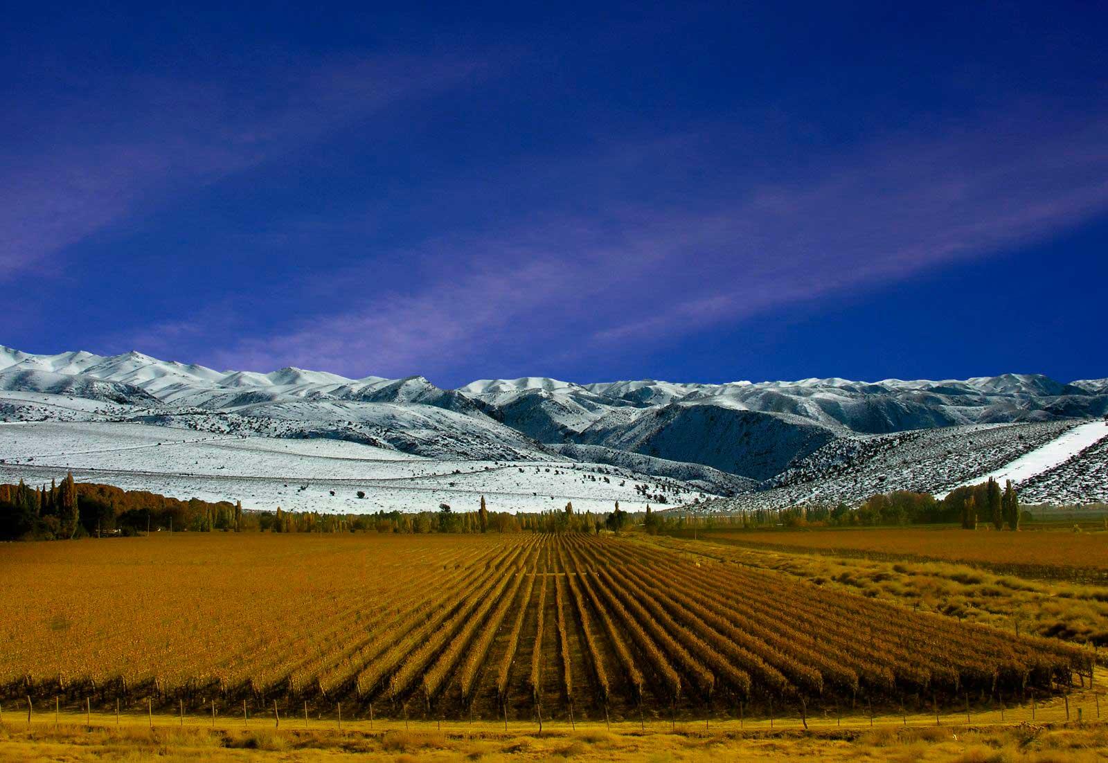 Vinhedos de Mendoza/ Crédito foto: http://www.revistaviajar.com.br/artigos/739/chile-e-argentina-de-carro-pelos-andes