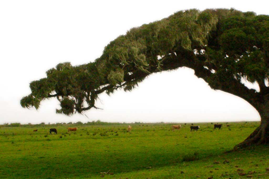 Crédito foto: http://www.panoramio.com/user/2474663/tags/Taim%20-%20RS