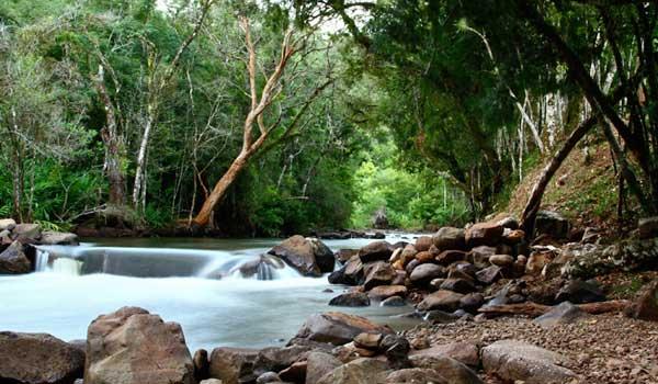 Crédito foto: http://pro.casa.abril.com.br/group/cronicasdoouroverde/forum/topics/tr-s-coroas-rs