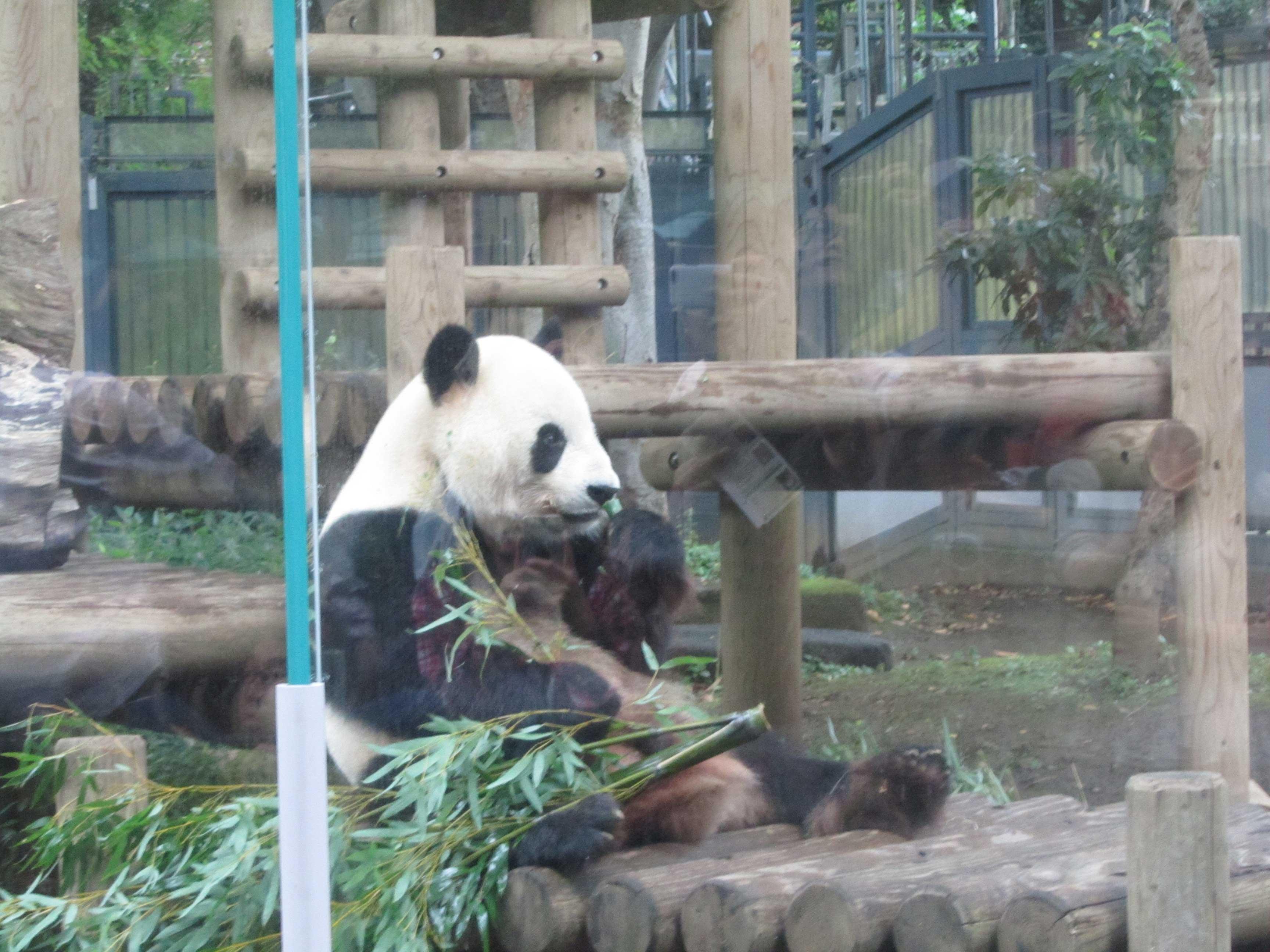 Panda no Ueno Park