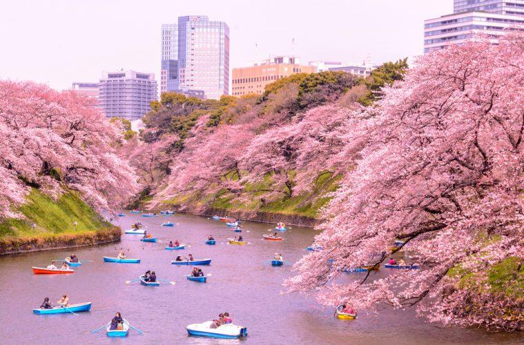 Resultado de imagem para Japão em Cherry Blossom Season