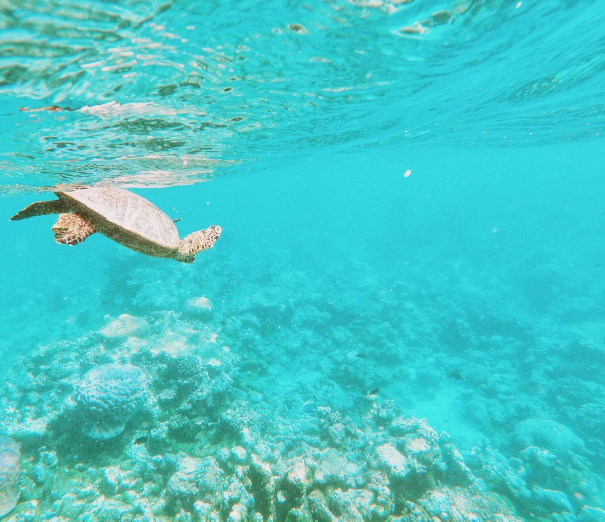 Maldives Turtle Reef